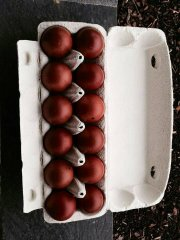 Maran egg